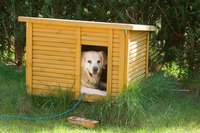 The real estate market is booming when it comes to dog houses.