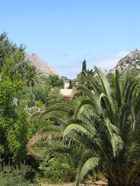 Palms are part of the landscape in Spain.