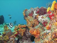 Cozumel is known for its vibrant reefs, which visitors can see while snorkeling or scuba diving.