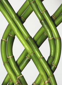 Colored ribbons on lucky bamboo have various meanings.