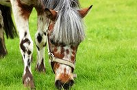 Horses can suffer from a variety of intestinal problems.