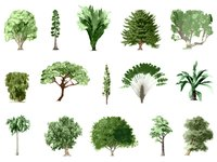 Depict realistic trees in a painting with some basic art supplies.