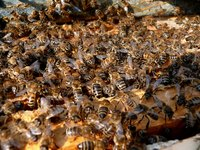 Prevention is your best bet when it comes to roof bees.