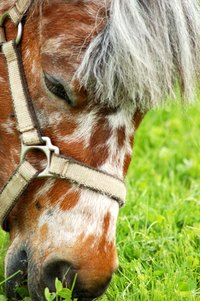Sunburned noses are a frequent problem for many horses.