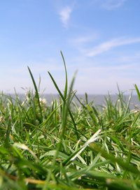 St. Augustinegrass grows well in Southern states.