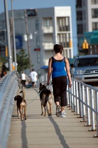 A dog walking business is a low capital start-up.