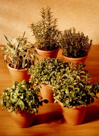 Selling herbs can be a fun and rewarding business.
