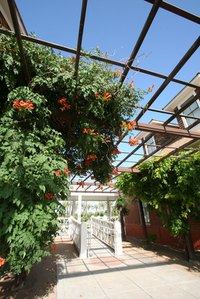 Trumpet vine, popular with hummingbirds, can quickly overwhelm your yard,