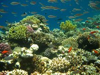 Coral reefs, known as the rainforests of the ocean, are negatively affected by both human and natural stresses.