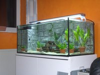 A well-kept aquarium is an important part of caring for pot belly mollies.