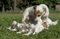 Mom provides all the nourishment puppies need for their first few weeks of life.