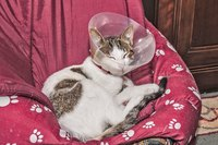 A cat resting on a chair while wearing a protective cone.