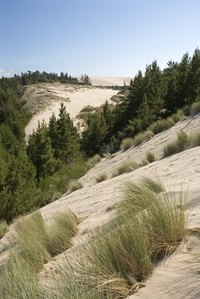 Grasses native to drier areas develop deeper roots to reach underground water supplies.