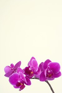 Orchids flaunt their colors.