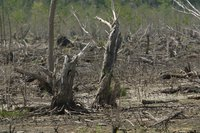 Deforestation is a major issue in many countries.