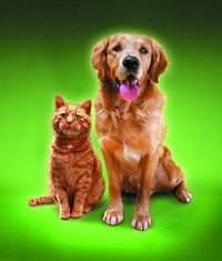 Scents can help you keep dogs and cats from damaging delicate items.