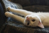 Cat stretching out on couch.