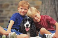 Amiable Cocker Spaniels make gentle companions for children.