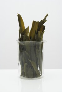 Although there are more than 17,000 seaweed species, red and brown are the two most commonly used in cosmetic products.