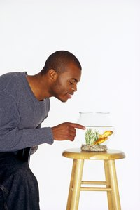 The smaller your fish tank is, the less opportunity your fish has to get away if he becomes frightened.