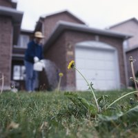 Eliminate weeds while maintaining your lawn's health with natural methods.