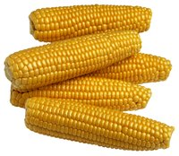 A hydrolysate made from corn gluten may be best for weight loss.