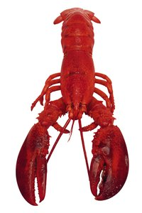 Cut the lobster in half lengthwise to remove the sac and intestinal vein.