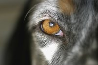 Keep careful track of any changes in your dog's eyes.