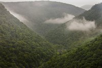 Several overlooks provide sweeping vistas of Pine Creek Gorge.