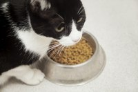 Cat eating from food bowl.
