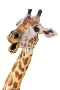 Capture the stand-out (and stand-tall!) look of a giraffe in your homemade costume.