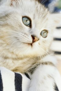 Your cat's eyes should be bright and clear.