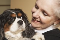 Human-animal interaction has a positive effect on therapy sessions.