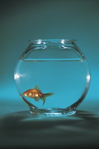 A goldfish bowl is not appropriate for housing guppies.