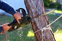 Removing smaller trees that you can easily access is a lower-cost, one-person job.