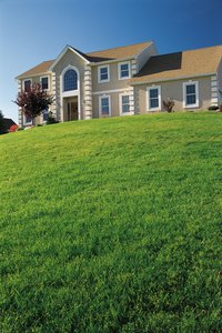 Any areas of new lawn that aren't green and healthy signify a problem.