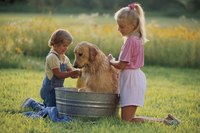 Never bathe your dog more than once every two weeks or you will dry out his skin.