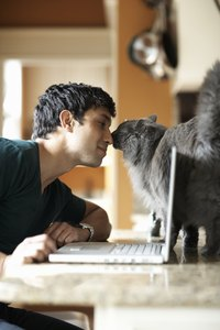 Going head-to-head with your cat can mean a nice social visit for him.