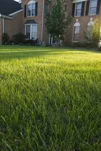 Anyone can have a lawn that looks professionally maintained.