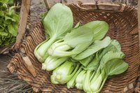 Basket of bok choy