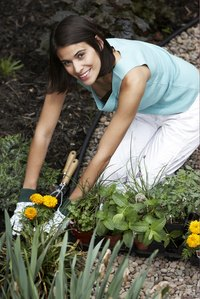 Close-up of a female gardener preparing to place new plants in her garden