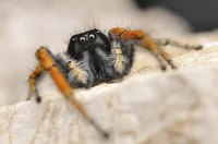 Though widely feared, few spiders are dangerous to humans and all help to reduce insect populations.
