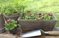Wooden planter box with flowers