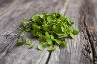 Close-up of watercress leaves