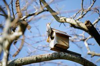 Bird houses attract birds due to their nesting instinct.