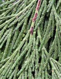 Cedar is one of nature's best odor and moisture fighters.