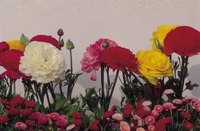 Carnations and roses complement each other in a floral arrangement.