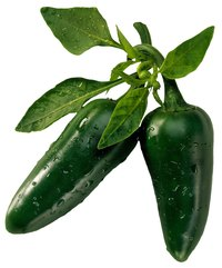 Healthy jalapeno peppers have a thick, glossy skin with a rounded tip.