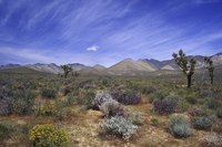 Desert soils support plants suited to arid conditions.