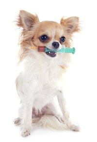Vaccinations can protect your dog from many preventable diseases.